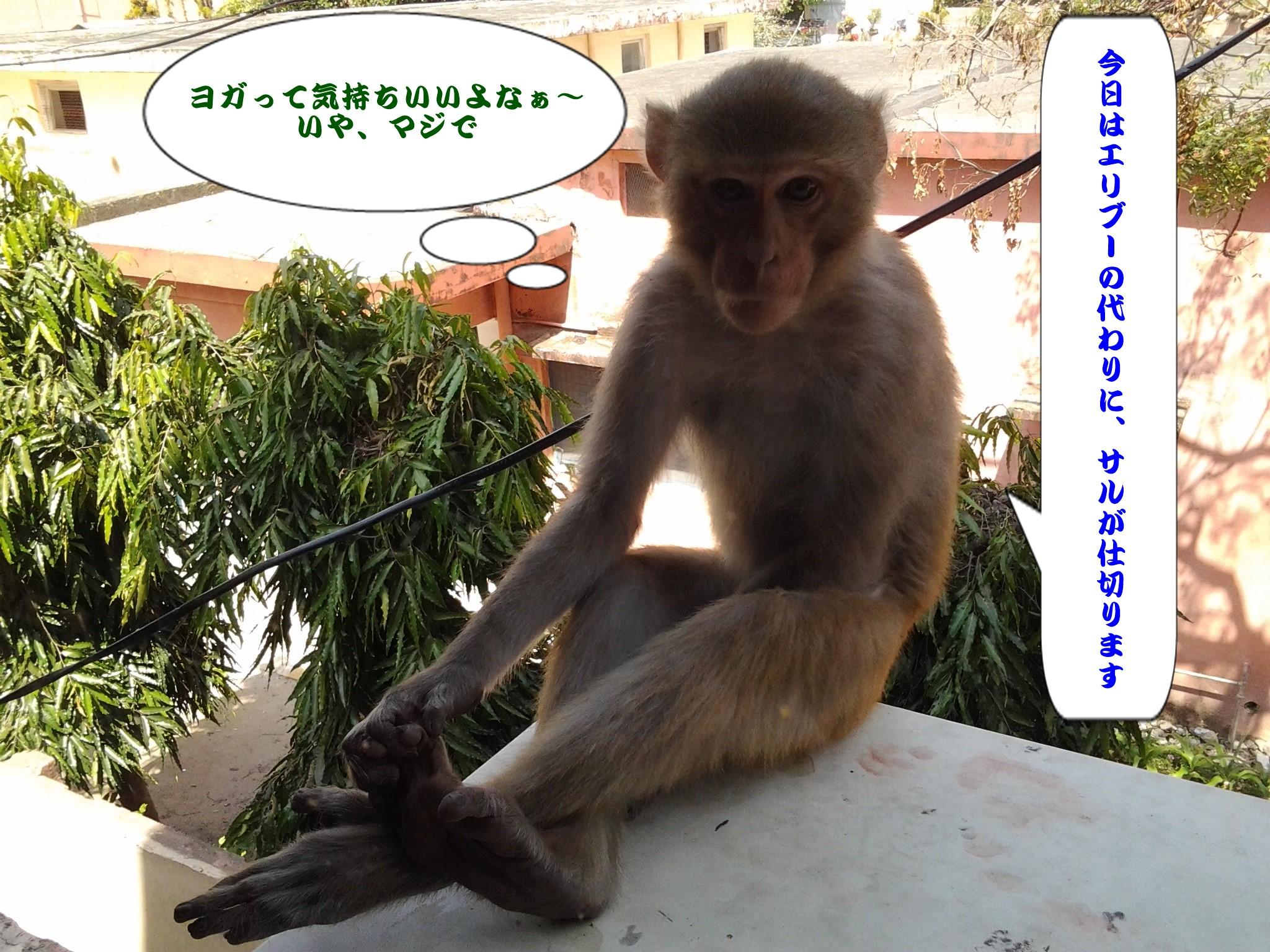 blogzaru2.jpg