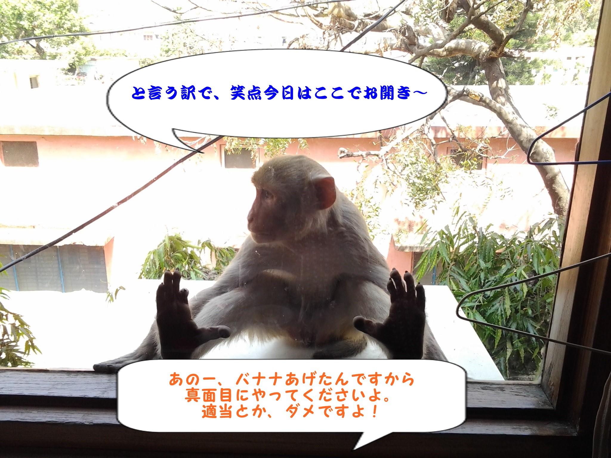 blogzaru4.jpg