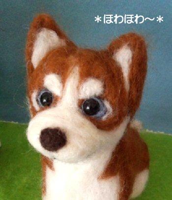 ハスキーちゃん子犬のお顔