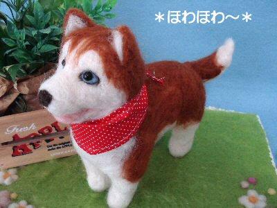 ハスキーちゃん成犬2