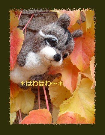 秋のリス1
