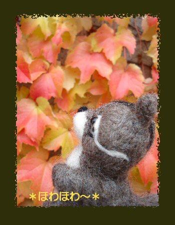 秋のリス2