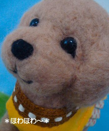toypoodle-2.jpg